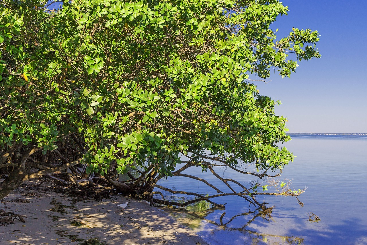 beach clean up and mangrove trimming